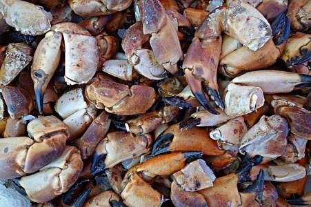 crustacean meal