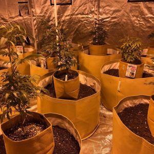 indoor grow room setup