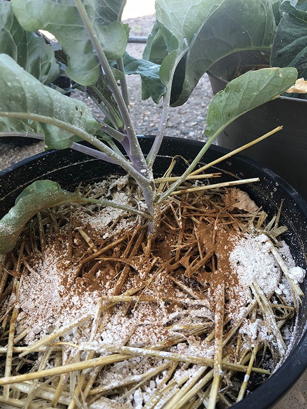 using cinnamon in the garden