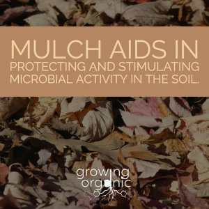 mulch aids in microbial activity