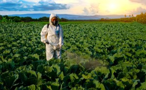 increased pesticide use causing health problems