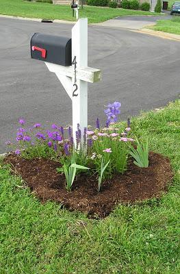 mailbox garden - growing