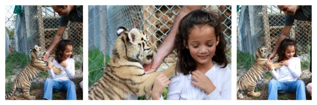 Making sure the playful tiger doesn't chew on my little girl's ear. :)