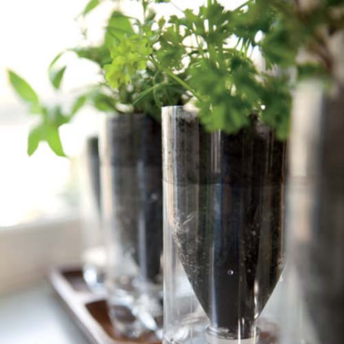Self watering recycled bottle herb planters. Photo: Spooful.