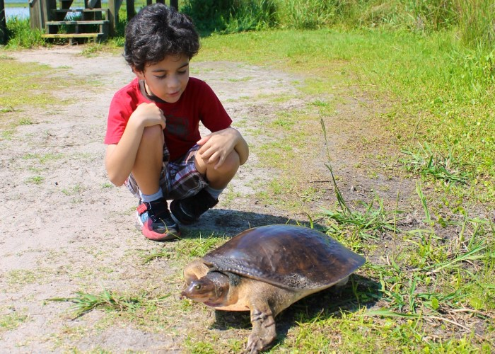 Great Educational Things To Do In Gainesville With Kids