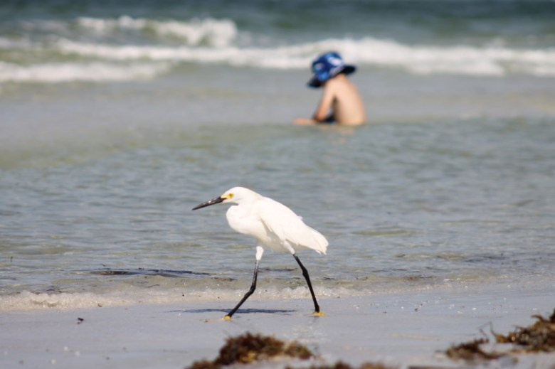wading bird at the beach