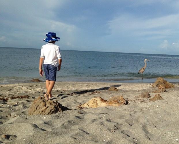 Venice beach Florida Caspersen beach boy with great blue heron