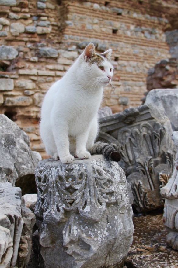cat in Ephesus ruins, the cats of Turkey