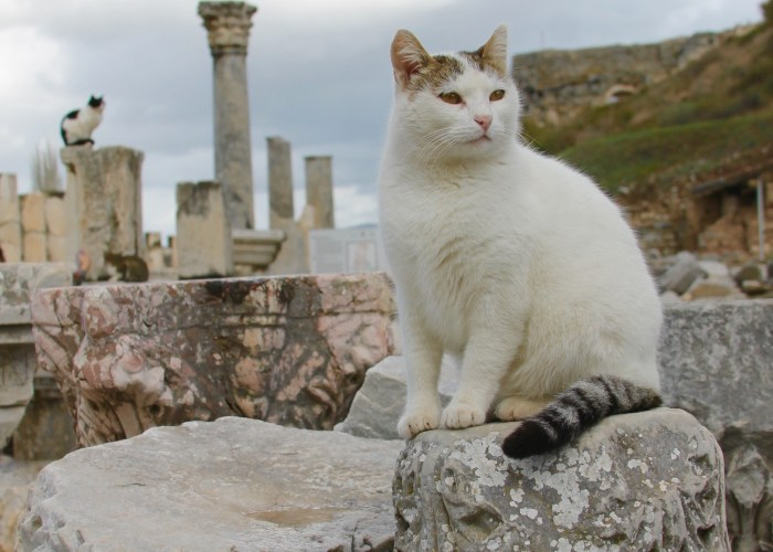 The Cats of Ephesus