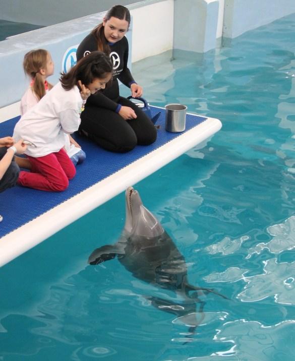 Meeting Hope at the Clearwater Aquarium