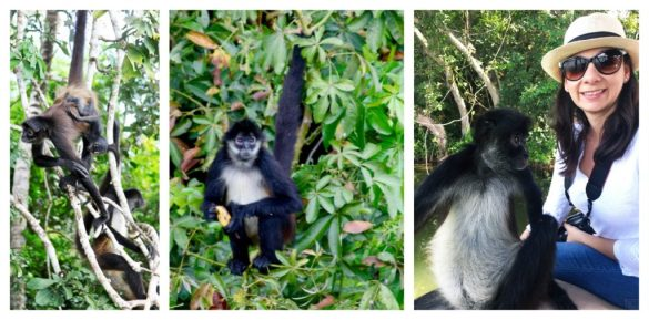 spider monkeys at Las Lagunas hotel Guatemala