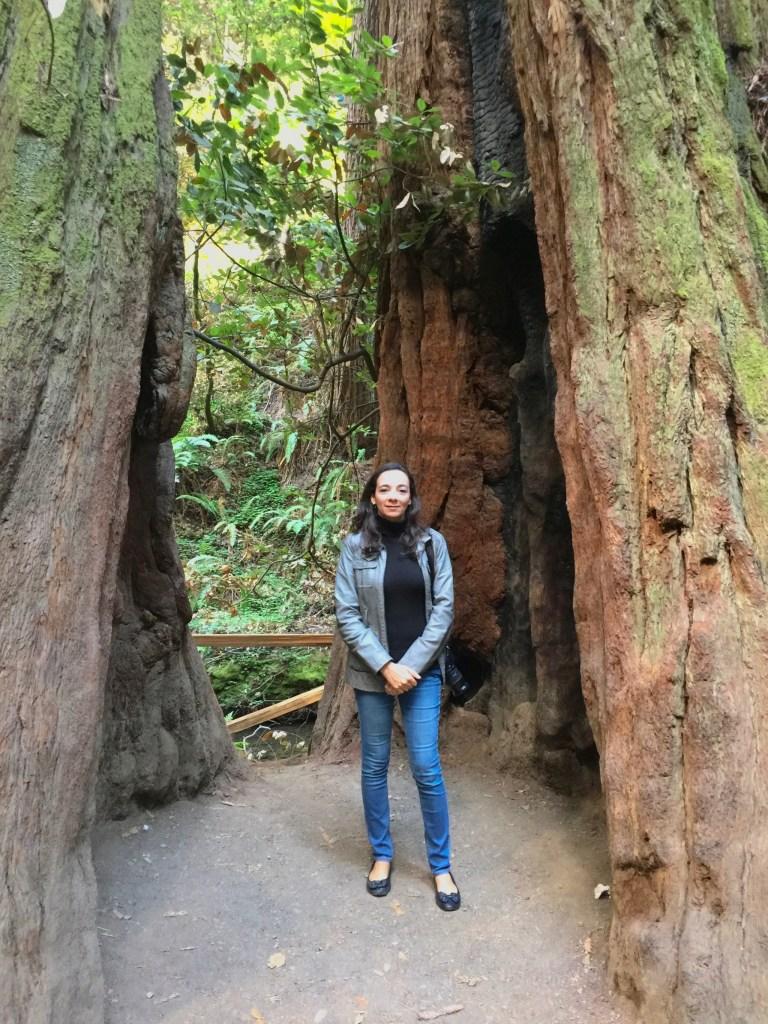 Muir Woods National Park