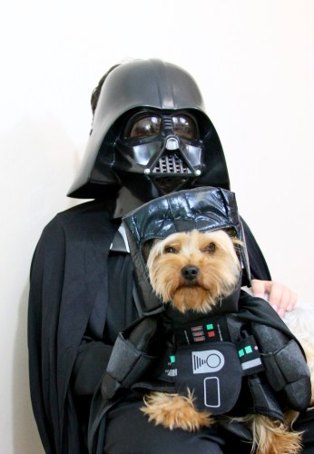 tips for trick-or-treating with kids and pets