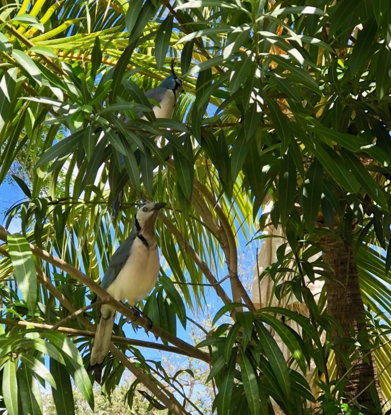 Local birds at Dreams Las Mareas