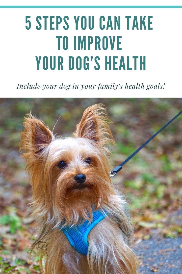 5 Easy Steps You Can Take to Improve Your Dog's Health