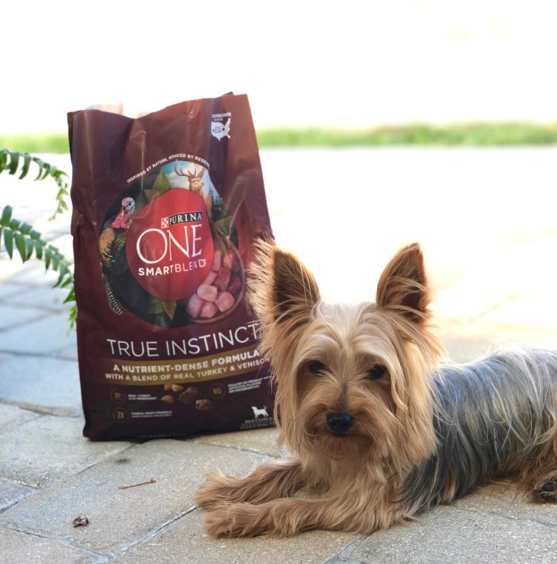 5 Steps for Choosing the Right Dog Food