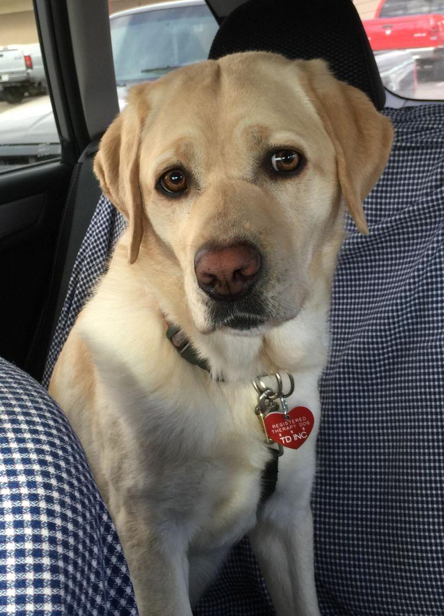 therapy dog handler salary
