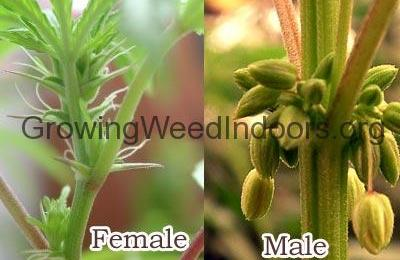 female plant and male pot plant