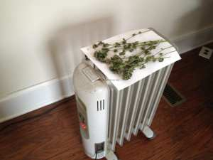 dry your weed on an oil heater