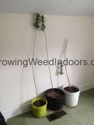 Are Smaller Pots Better For Growing Pot Inside