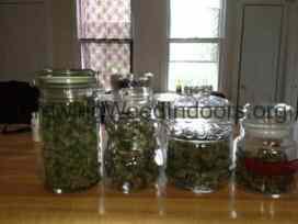 Pot buds in glass jars