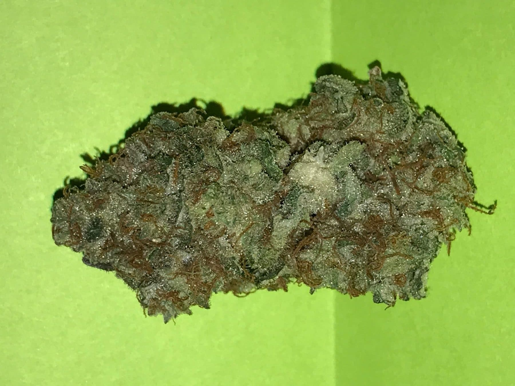 Gold Leaf Strain Review
