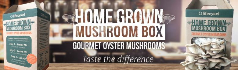 home-grown-mushroom-box