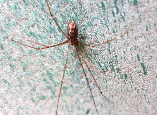 20170810 daddy spider