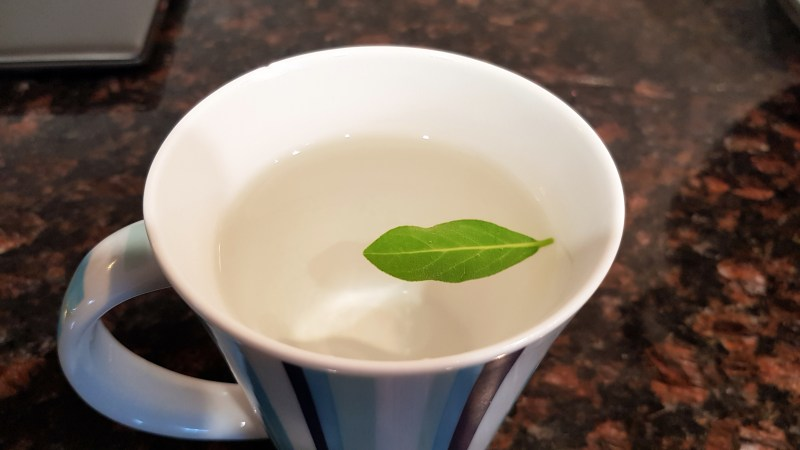 20180429 bay leaf tea.jpg