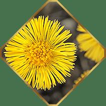 Growixin - קאַפּסאַלז קעגן האָר אָנווער (פוילן)
