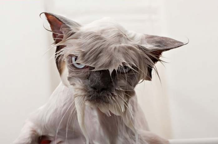 Image result for Cat and Dog- bad hair day- images