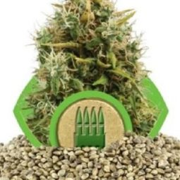 growmart-royal-ak-automatic