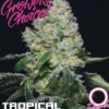 Ta pravá semena marihuany Growers Choice Tropical Cookies