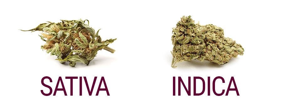 growmart_sativa_vs_indica_palice