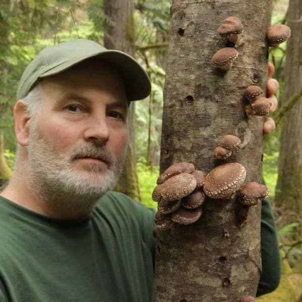 shiitake sawdust spawn for mushroom log inoculation Canada