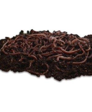 Worm Compost: Uncle Jim's Worm Farm