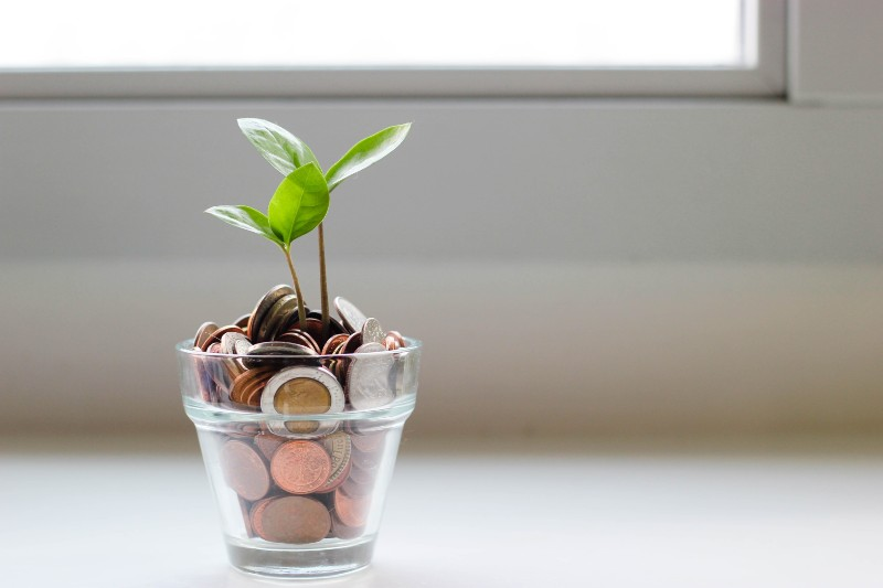 plant growing out of jar of money