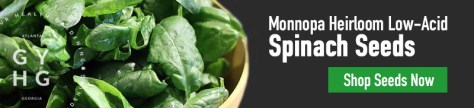 Monnopa Spinach Seed