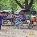 horse carriages bagan