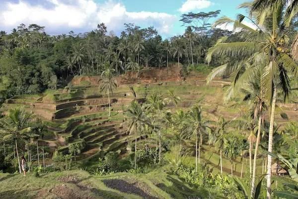 ubud Rice terraces of Tegallalang village, bali rice terraces