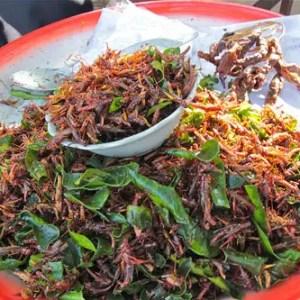 eating bugs, deep friend bugs