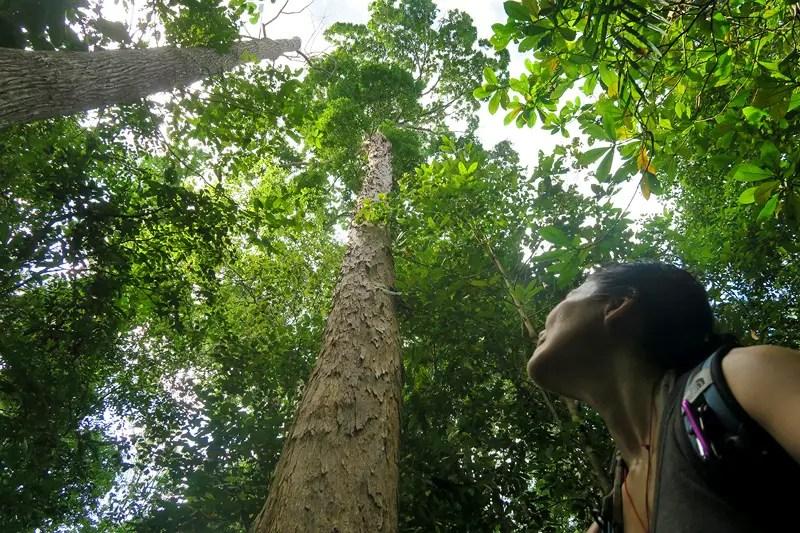 forestry, mangroves, hiking at bako, bako national park, hiking trails borneo