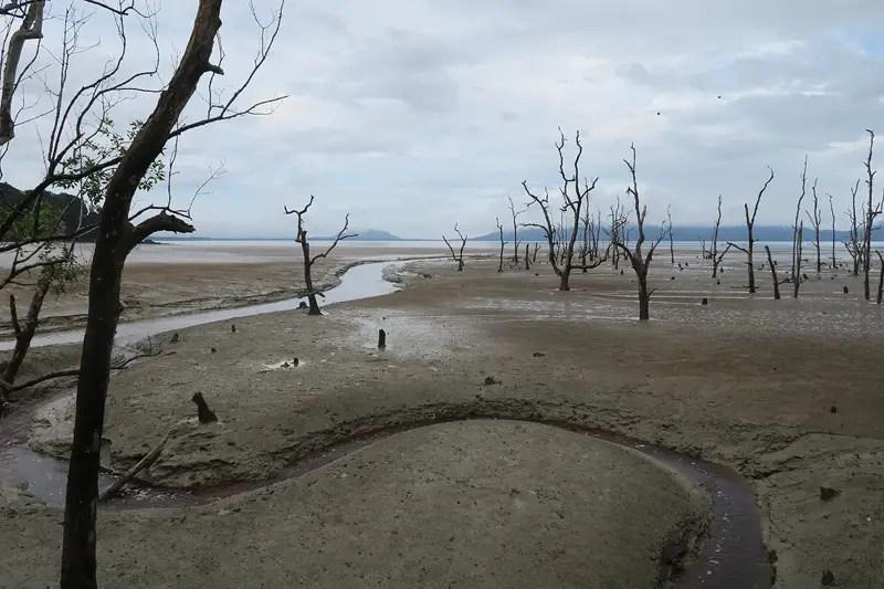 low tide photos of bako national park