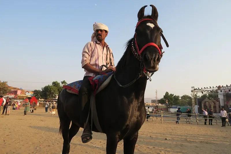 horse camps pushkar, pushkar mela, indian horses