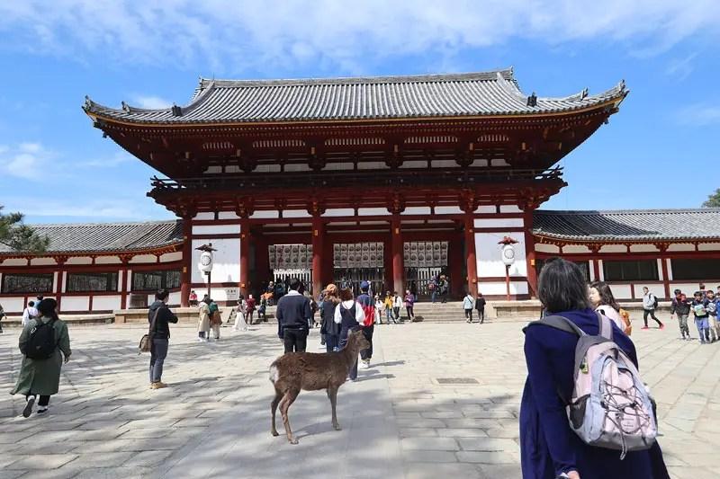 nara park temple, best sakura spots in nara