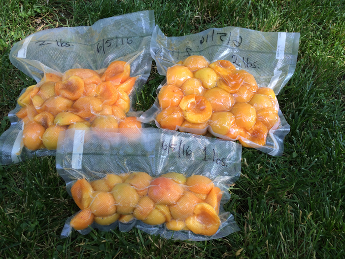 Apricots will be frozen until the hops are ready.