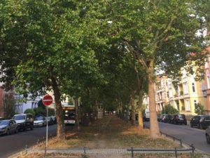 Jasperallee zwischen Stadtpark und Paulikirche