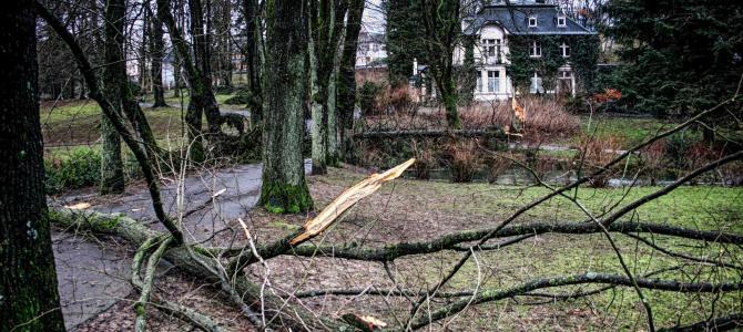 Kyrill – 10 Jahre nach dem Orkan