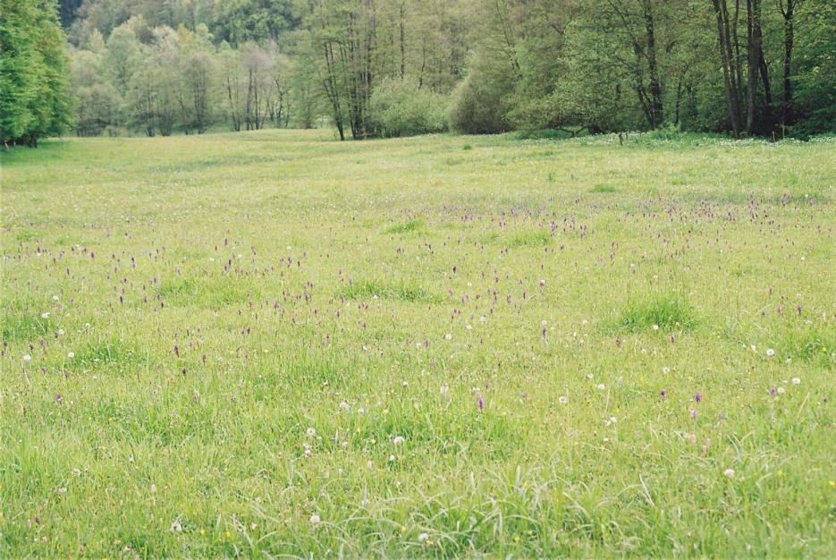 Naturschutzgebiet in Meinerzhagen © Foto: Beate Hoppe