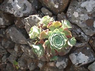 Aus der Steinmauer heraus...wer braucht schon einen Balkon auf La Palma?:-))